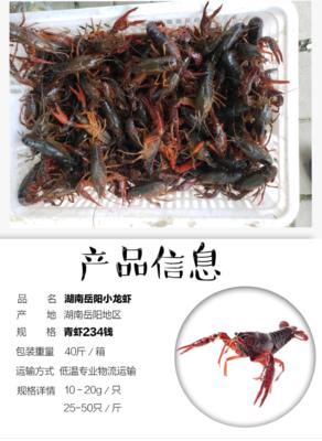 湖南省岳阳市岳阳楼区中国龙虾 国产 4-6斤/只