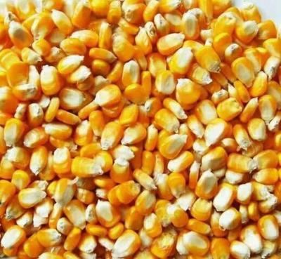 这是一张关于先玉335玉米粒 霉变≤1% 净货的产品图片