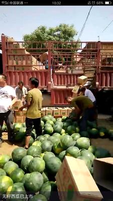 这是一张关于无籽西瓜 无籽 1茬 9成熟 8斤打底的产品图片