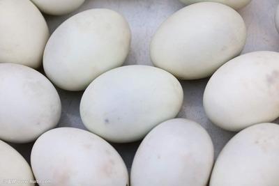 北京密云县鲜鹅蛋 食用 散装