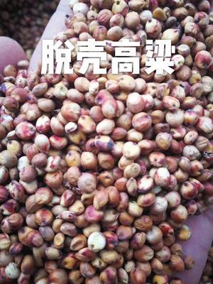 河北省邯郸市丛台区红高粱 霉变 ≤3% 1等品