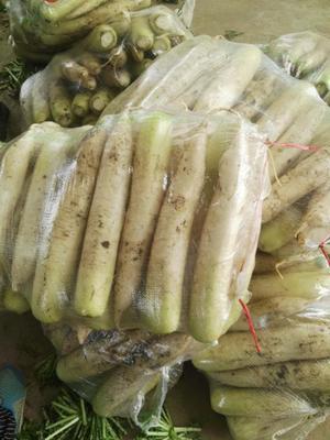 山东省临沂市兰陵县白萝卜 1.5~2斤