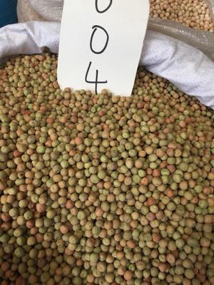 四川省成都市金牛区豌豆尖 10-12cm 饱满