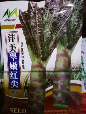山东省济南市历城区红尖叶莴苣 12~16cm 1.0~1.5斤
