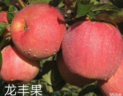 黑龙江省哈尔滨市南岗区红沙果 14g以上