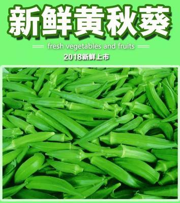 陕西省咸阳市杨陵区黄秋葵 8 - 10cm