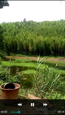 广西壮族自治区桂林市临桂县楠竹