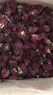 河北省保定市安国市法国墨红玫瑰