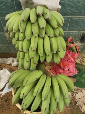 广西壮族自治区河池市巴马瑶族自治县芭蕉 八成熟 40斤以下