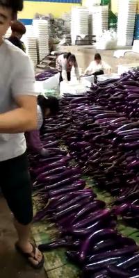 云南省红河哈尼族彝族自治州建水县紫长茄 4两以上