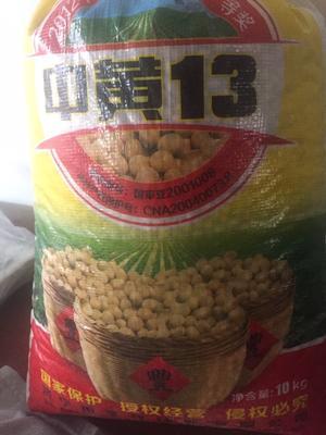 河北省廊坊市香河县中黄13黄豆 熟大豆 1等品