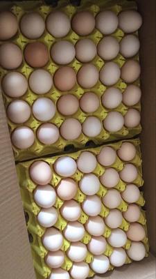 上海青浦区土鸡蛋 食用 箱装