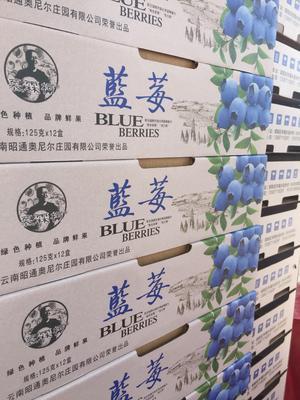 云南省昭通市昭阳区灿烂蓝莓 鲜果 12 - 14mm以上