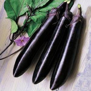 辽宁省丹东市东港市紫长茄 5两以上