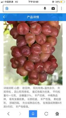 辽宁省葫芦岛市兴城市心愿葡萄苗