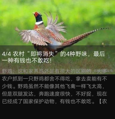 河北省石家庄市高邑县七彩山鸡 2-3斤