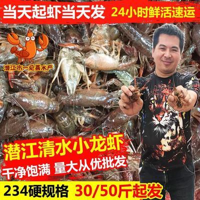 湖北省潜江市潜江市潜江小龙虾 人工殖养 2-4钱