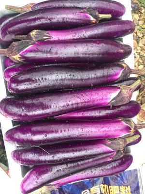 湖南省郴州市宜章县紫红茄霸王 3两以上