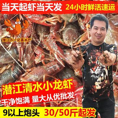 湖北省潜江市潜江市潜江小龙虾 稻田虾 9钱以上