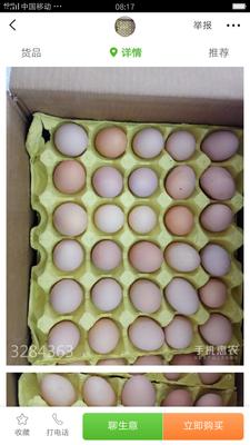 这是一张关于绿壳鸡蛋 食用 箱装的产品图片