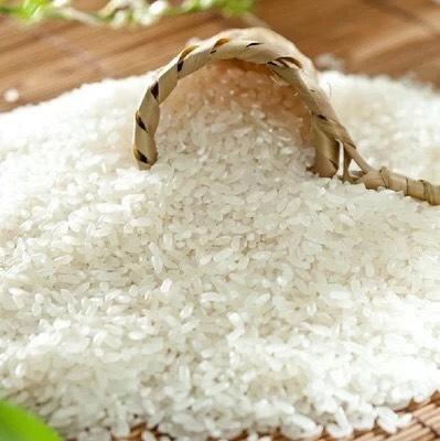 上海普陀区五常大米 有机大米 早稻 一等品
