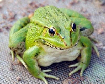 广东省广州市花都区青蛙