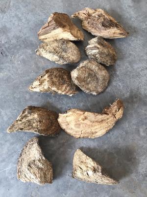 重庆城口县野生葛根 1.0-1.5斤
