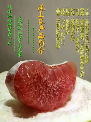 福建省漳州市平和县红心柚 2斤以上