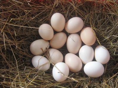 广西壮族自治区防城港市防城区土鸡蛋 食用 散装