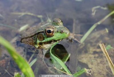 湖北省孝感市汉川市青蛙