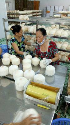 这是一张关于椰青 1.5 - 2斤的产品图片