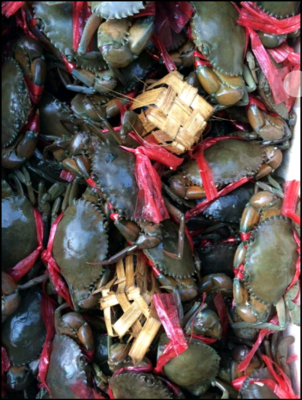 云南省昆明市官渡区红膏蟹 2.0-2.5两 母蟹