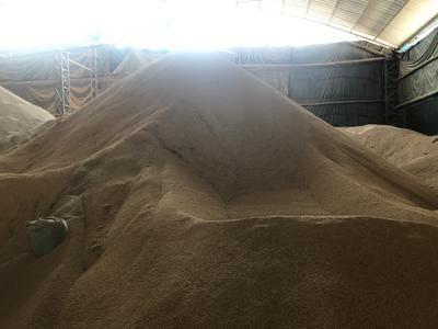 这是一张关于早稻203 早稻的产品图片