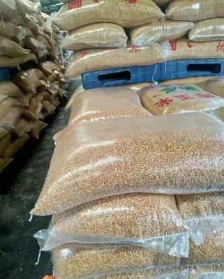 这是一张关于杂交玉米粒 霉变≤1% 净货的产品图片