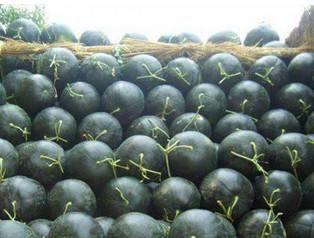 这是一张关于黑皮无籽西瓜 无籽 1茬 8成熟 8斤打底的产品图片