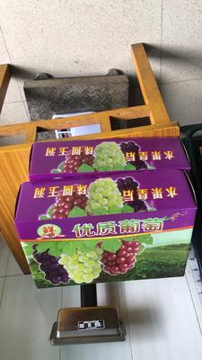 江苏省常州市武进区夏黑葡萄 5%以下 1次果 2斤以上