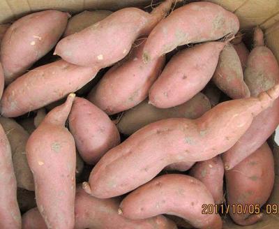 这是一张关于辽宁红薯206 红皮 3两以上的产品图片