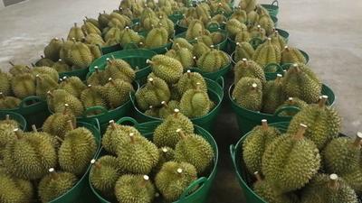 上海奉贤区金枕头榴莲 90%以上 2 - 3公斤
