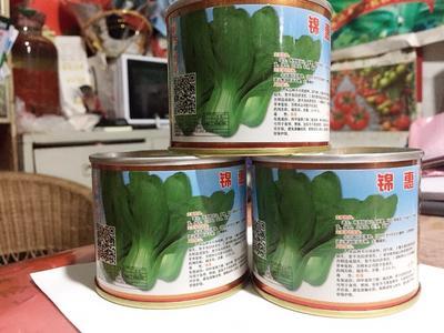 四川省成都市新都区油菜籽种子