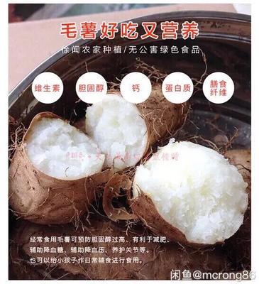 广东省湛江市徐闻县毛薯 2-5两
