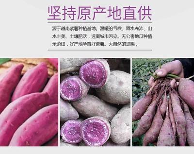 广东省广州市增城区紫罗兰紫薯 3两以上