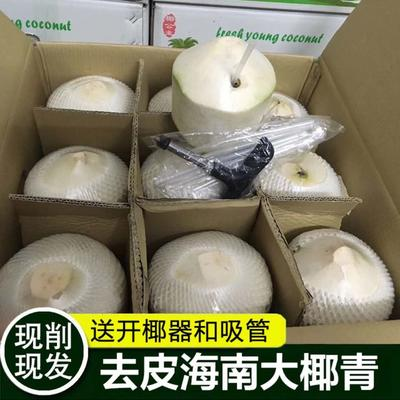 海南省海口市琼山区椰青 2.5 - 3斤