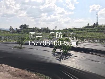 江西省赣州市崇义县防草布