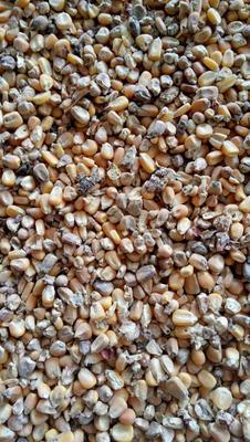 山东省青岛市平度市玉米干粮 霉变≤2% 净货