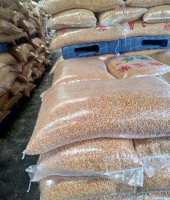 山东省东营市东营区先玉335玉米粒 霉变≤1% 净货