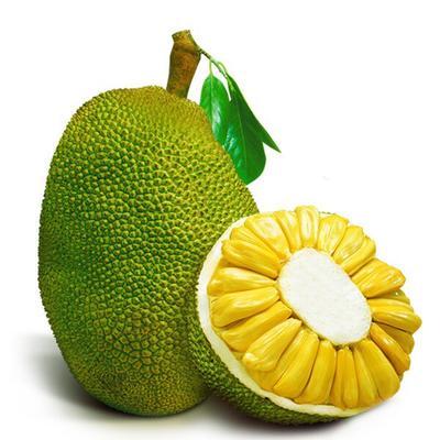广东省湛江市廉江市海南菠萝蜜 15斤以上