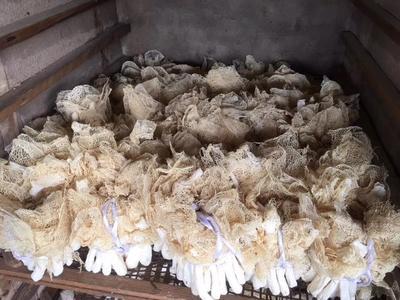 这是一张关于长裙竹荪 一级的产品图片