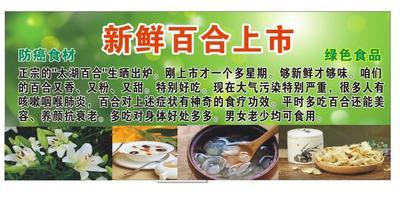 广东省广州市白云区龙山百合干 1年以上 一级