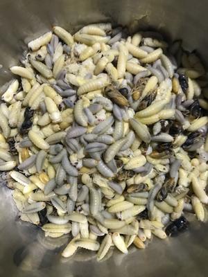 这是一张关于土蜂蛹的产品图片