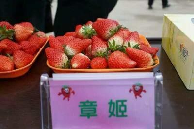 这是一张关于红颜草莓苗 地栽苗 20~30公分的产品图片